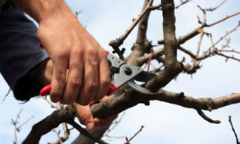Tree Pruning in Spokane WA Tree Pruning Services in Spokane WA Quality Tree Pruning in Spokane WA