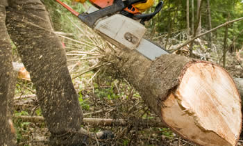 Tree Service in Spokane WA Tree Service Estimates in Spokane WA Tree Service Quotes in Spokane WA Tree Service Professionals in Spokane WA